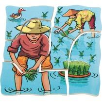 Pestovanie ryže